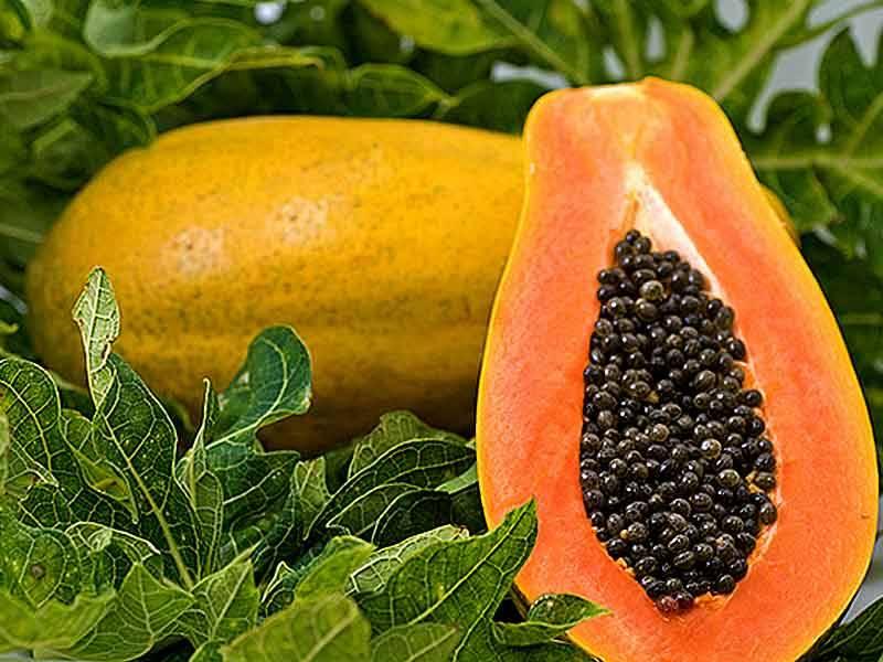 6 Amazing health benefits of Papaya fruit