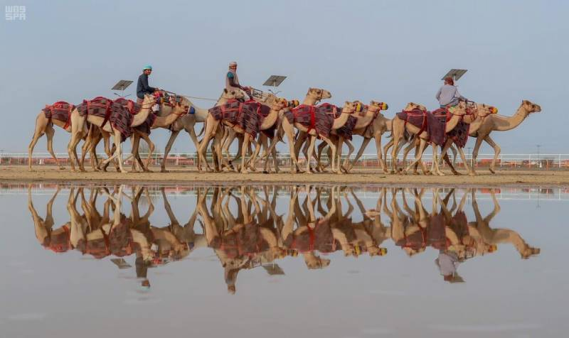 Saudi Crown Prince camel festival enters Guinness World Records