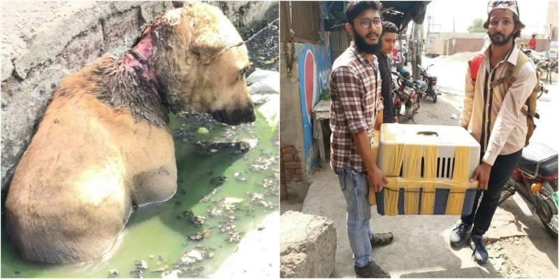 'Hero' Karachiites save injured dog from gutter