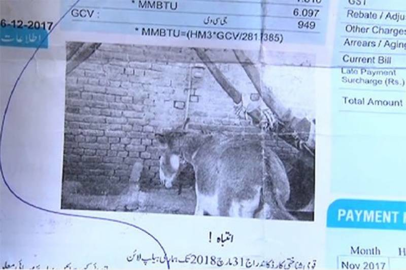 Gas bill featuring a donkey's picture shocks SNGPL consumer in Faisalabad