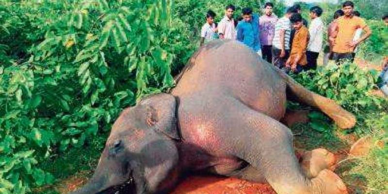 Two elephants die in another Sri Lanka train collision