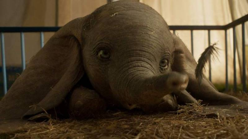 Watch: Disney's 'Dumbo' magical trailer will make you fall in love with it!