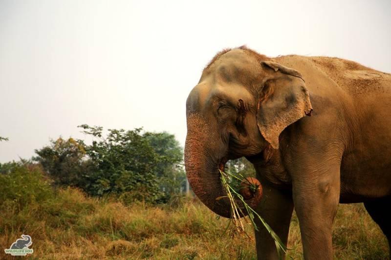 India opens first-ever elephant hospital near Taj Mahal
