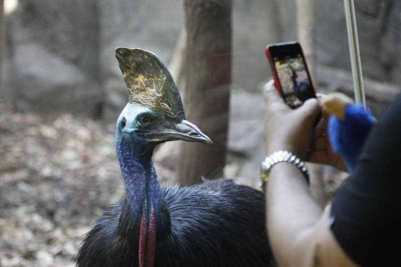 'World's most dangerous bird' kills its owner