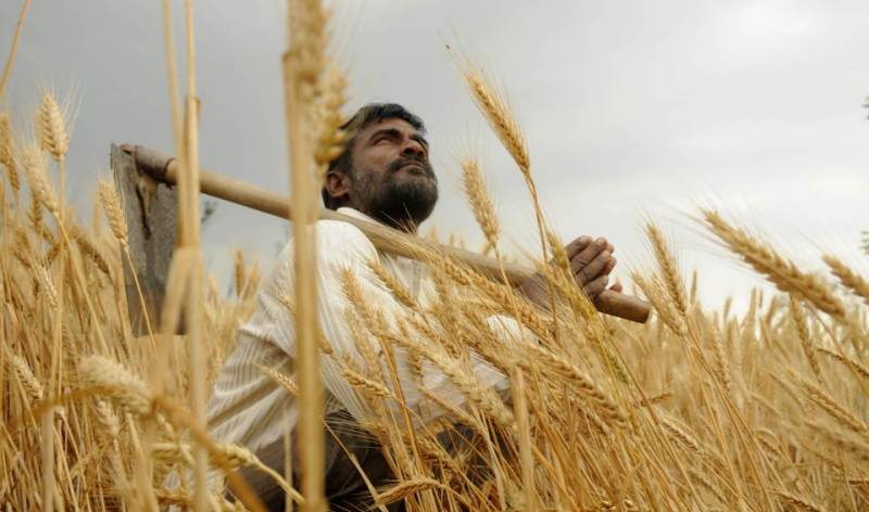 CM Buzdar kicks off wheat harvesting campaign in Punjab