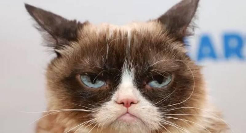 Internet's famous Grumpy Cat dies aged 7