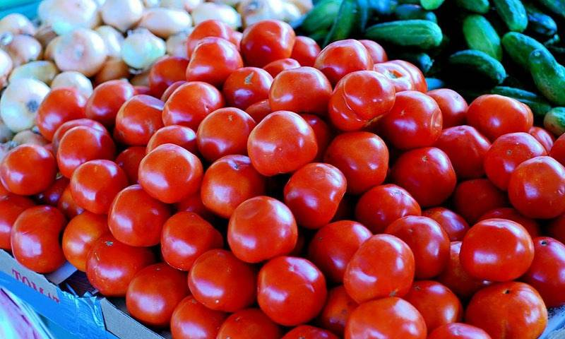 Armed men placed to protect tomato farms from thieves in Sindh