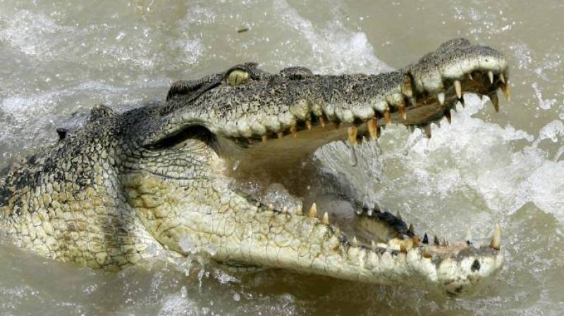 Australian man survives croc attack by gouging its eye