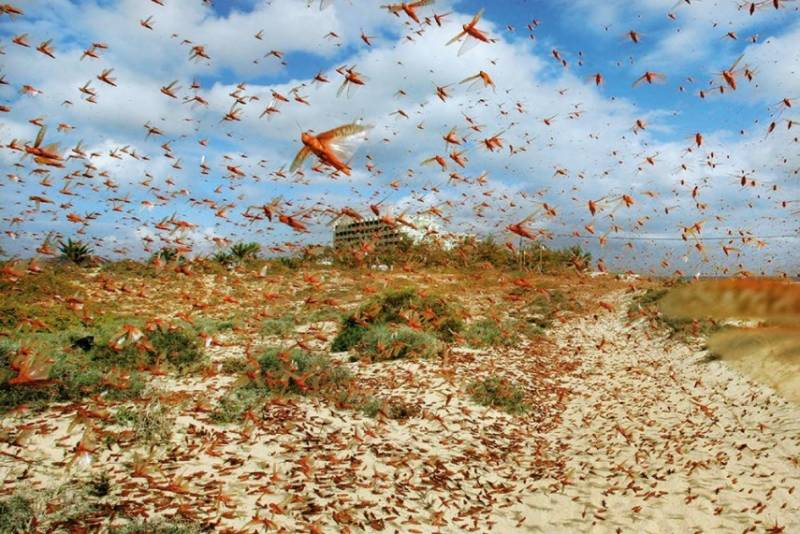 China to help Pakistan develop targeted program to combat locust