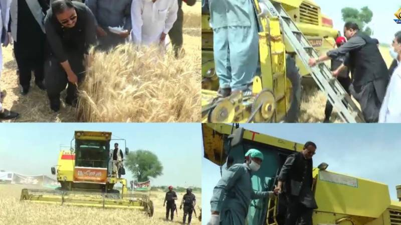 CM Buzdar opens wheat harvest in Punjab