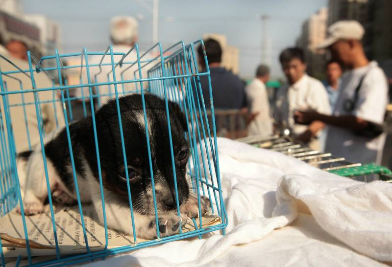 Beijing shuts door on eating, trading wild animals
