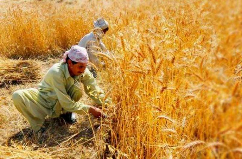 Issuance of agriculture loans underway in Punjab
