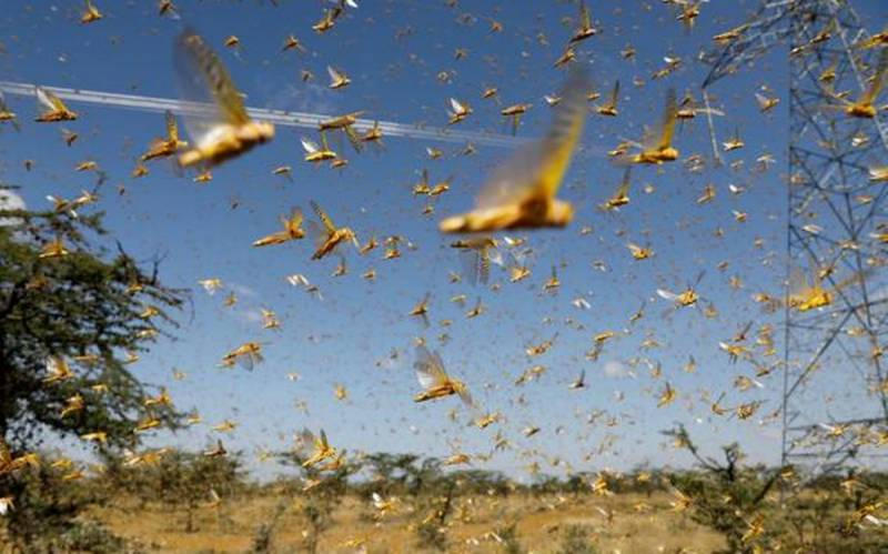 Locust attack: More areas surveyed, treated across the country