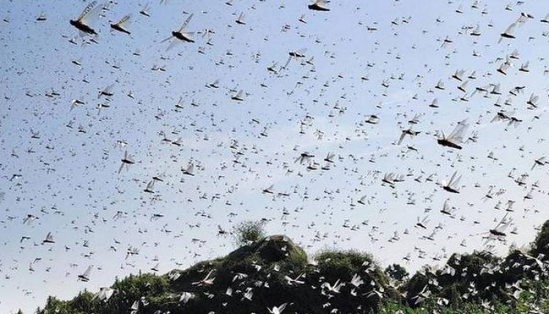 NDMA activates another two separate hotlines to counter locust, COVID-19