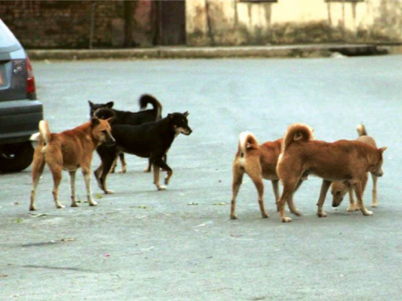 One boy died, another badly hurt due to dogs biting