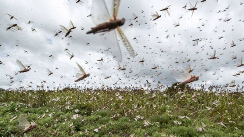 Chinese firm offers to produce drones to control locust in Pakistan