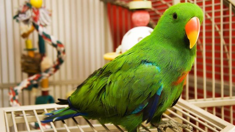 Pakistani teen killed by cousin for pet parrot