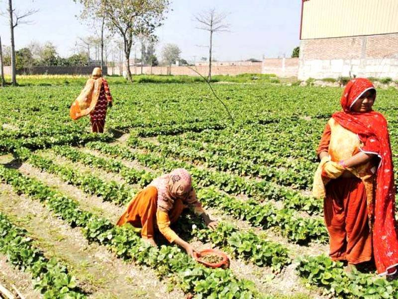 Budget 2020: Punjab allocates Rs31.37 billion for Agriculture sector