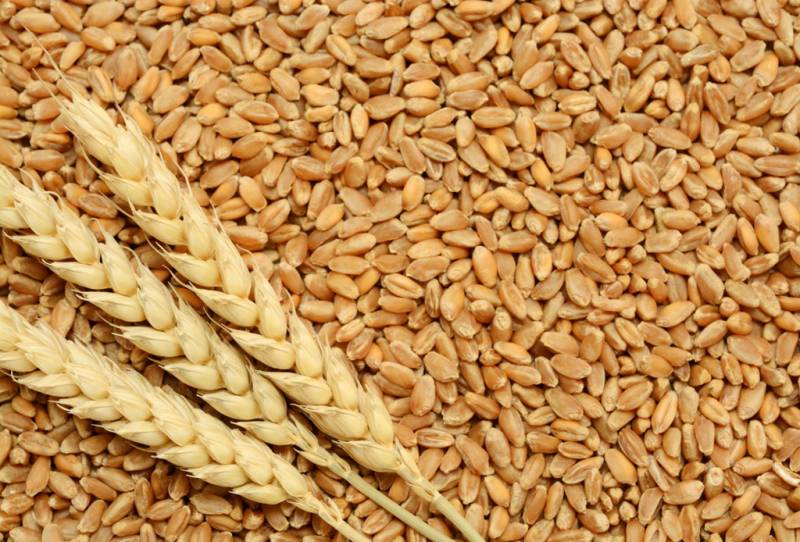 ECC allows private sector to import wheat to ensure availability of flour at reasonable price