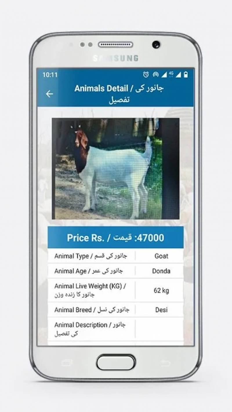Bakarmandi app launched in Punjab for online buying, selling of cattles for Eid ul Azha