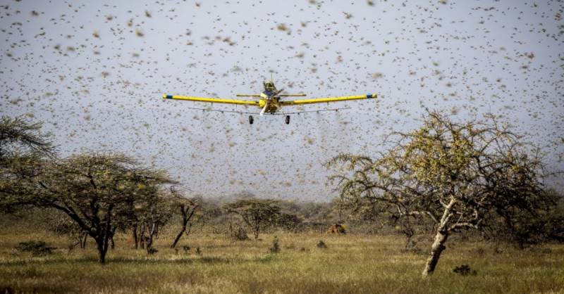 China gives 12 drones to help Pakistan fight off locusts