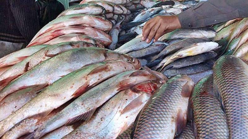 Fish exports increase 10% in June 2020