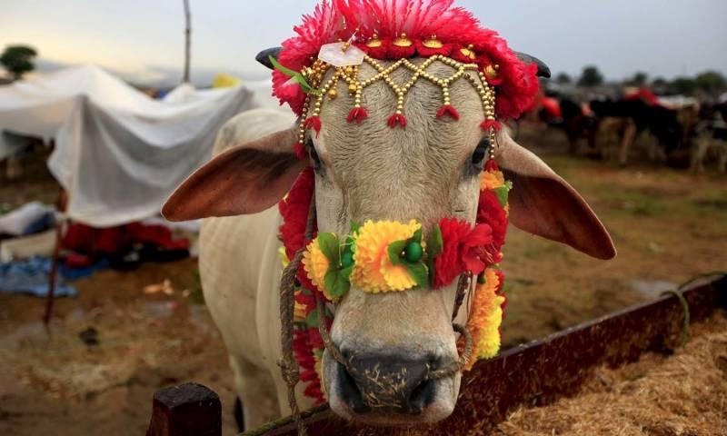 Animal sacrifices, festivities continue on 2nd day of Eidul Azha in Pakistan