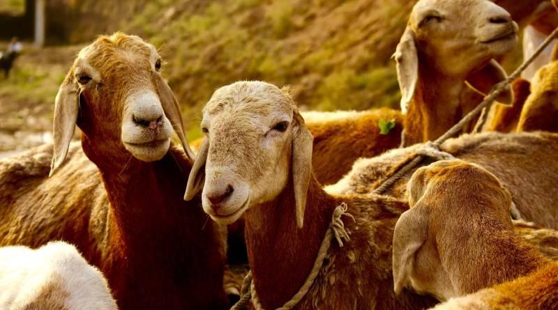 Eid-ul-Azha festivities, animal sacrifices ritual continue on third day across the country