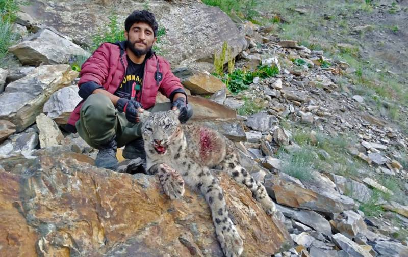 Five get jail term for illegally hunting snow leopard