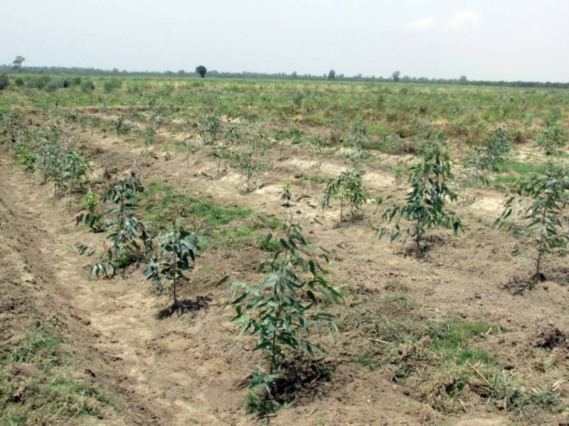 How a Pakistani farmer of five acres can earn up to Rs50 million?