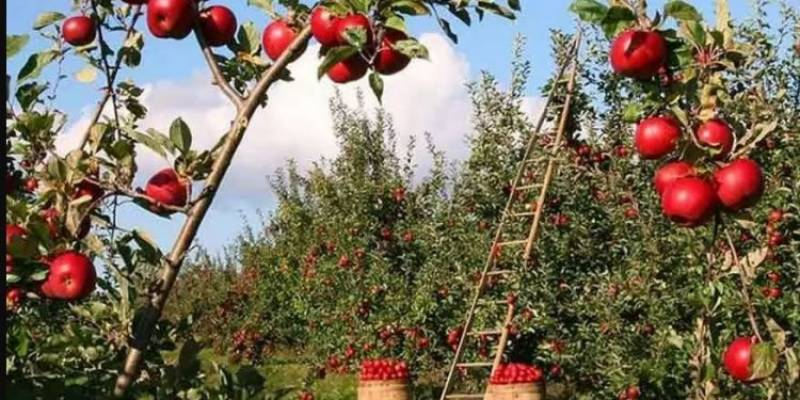 First ever fruit garden inaugurated in Islamabad