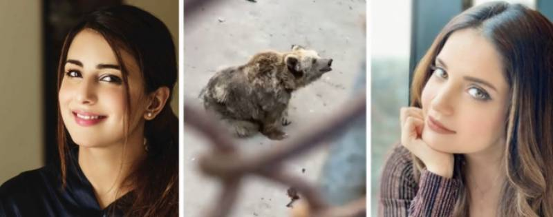 Armeena Khan and Ushna Shah call out Karachi Zoo after a viral video of a bear in a terrible condition