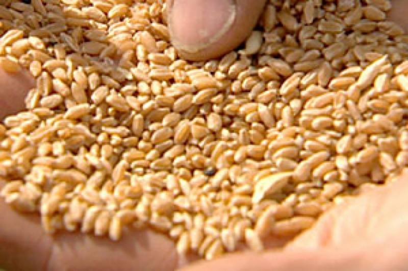 Pakistan to import wheat from Russia for stability in market