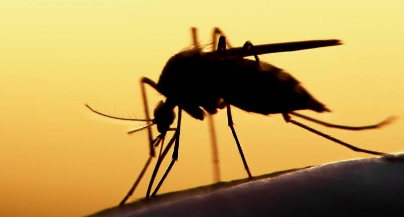 Punjab reports 5 confirmed, 645 suspected cases Of Dengue virus