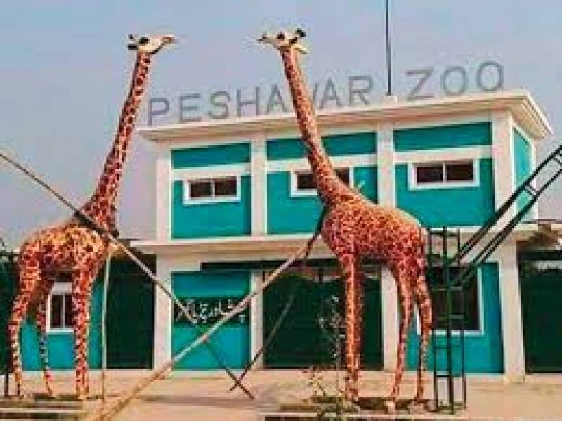 Tiger dies of wounds in Peshawar Zoo