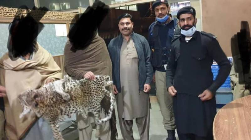 Gang of poachers smuggling Leopard skins busted in KPK