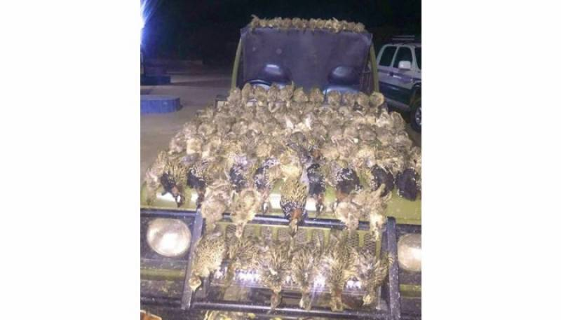 Two held over illegal hunt of 70 partridges