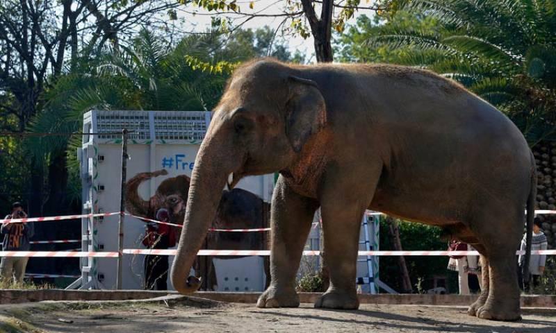 'Loneliest elephant' Kaavan leave Pakistan for Cambodia today