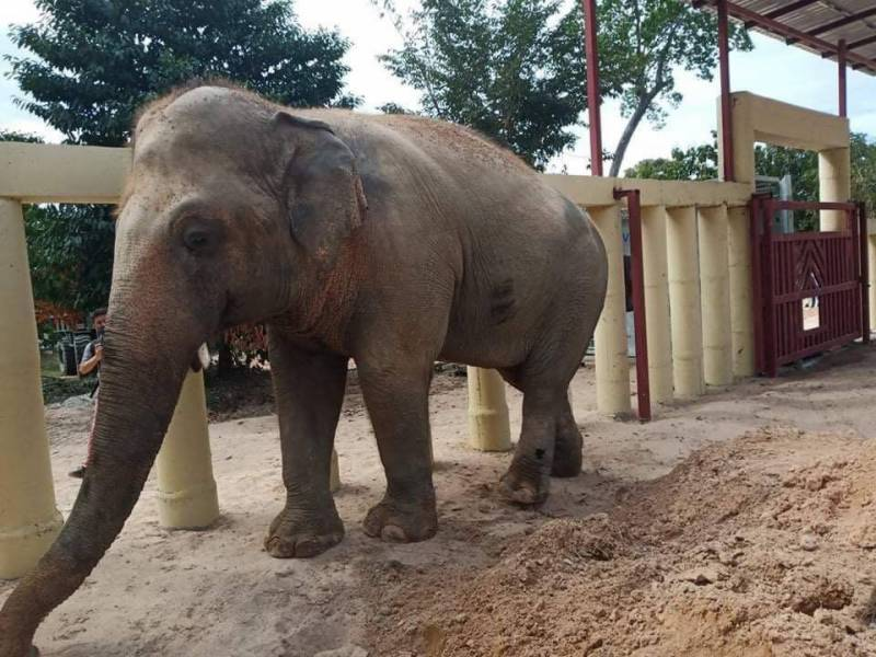 Kaavan looks happy in Cambodia after freedom from Pakistani zoo