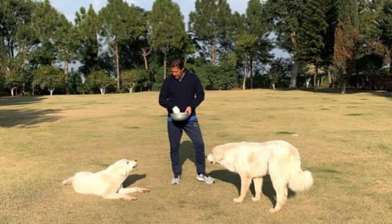 PM Imran spends a sunny Sunday with Sheru and Tiger