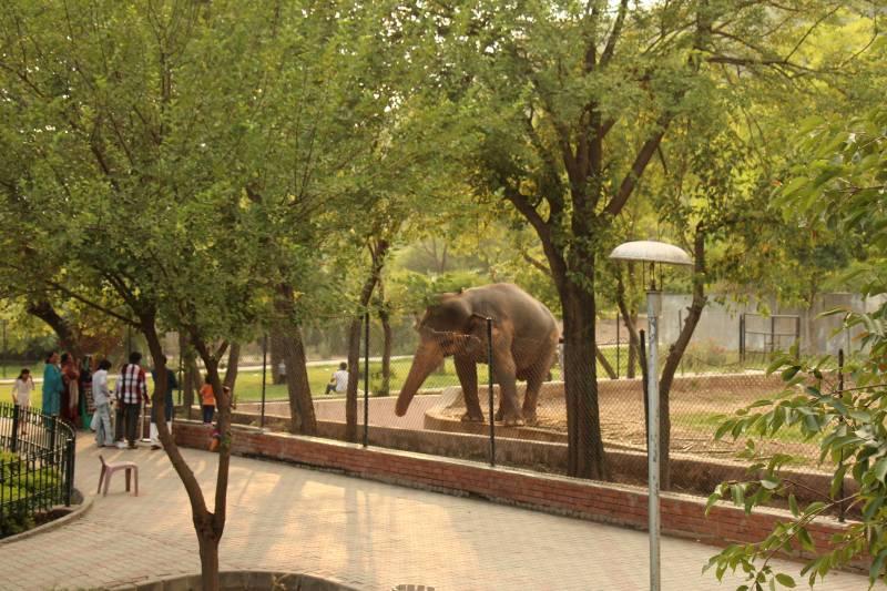 Pakistan turns Islamabad zoo into Safari park after last animals flown to Jordan