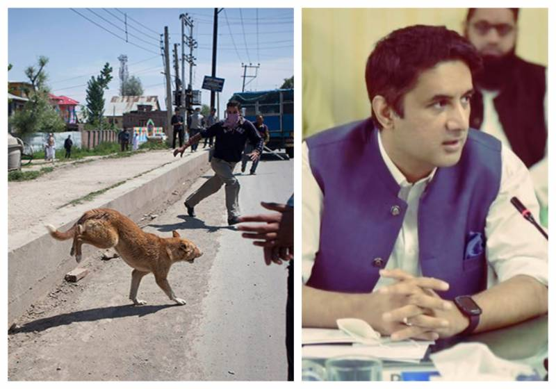 Twitter user asks DC Islamabad to shelter stray dogs in PM House