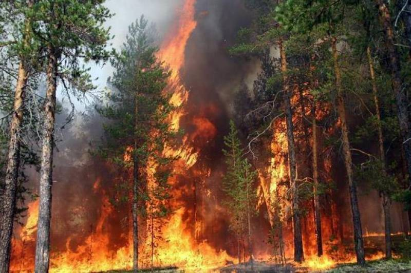 Trees worth millions turn into ashes as Ayubia forest fire continues for third day