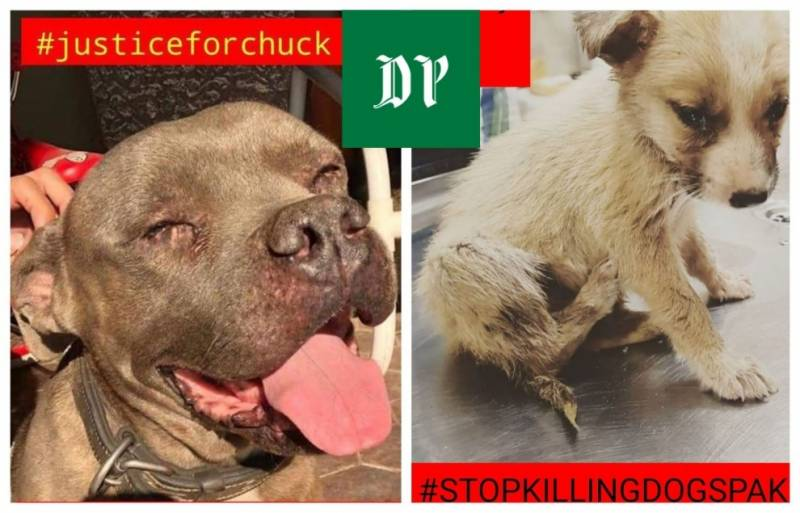 #JusticeforChuck – Protest against animal abuse, killings in Lahore on Sunday