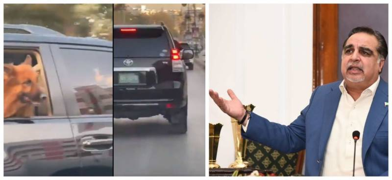 'Look who's talking' – Governor Sindh responds to 'dog enjoying protocol' video