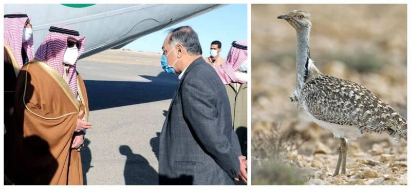 Saudi prince, delegation arrive Balochistan to hunt houbara bustards