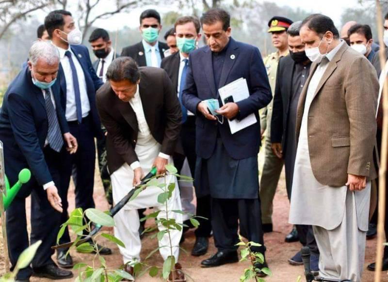 PM Imran tweets pics of first Miyawaki Urban Forest in Lahore