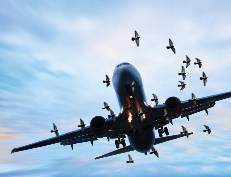 PCCA to install bird repellant system at Karachi and Lahore airports