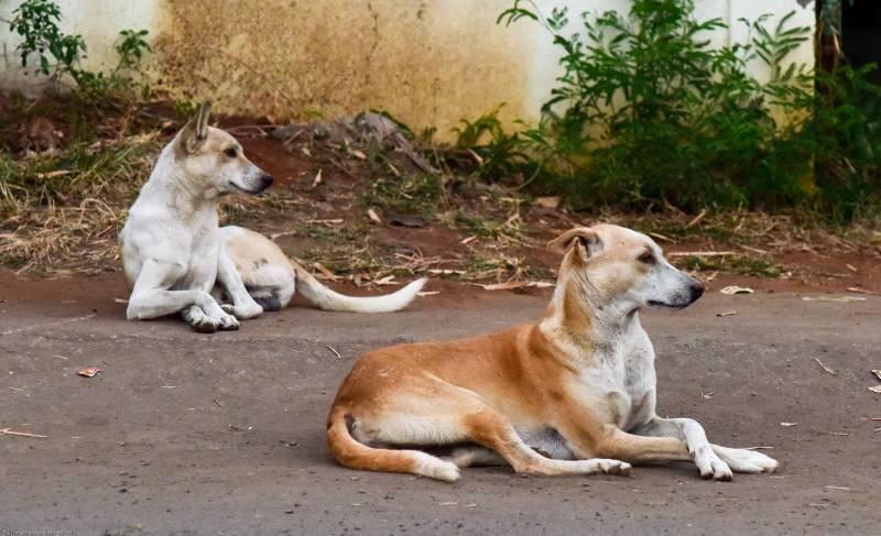 Shots fired to kill dog take man's life in Faisalabad