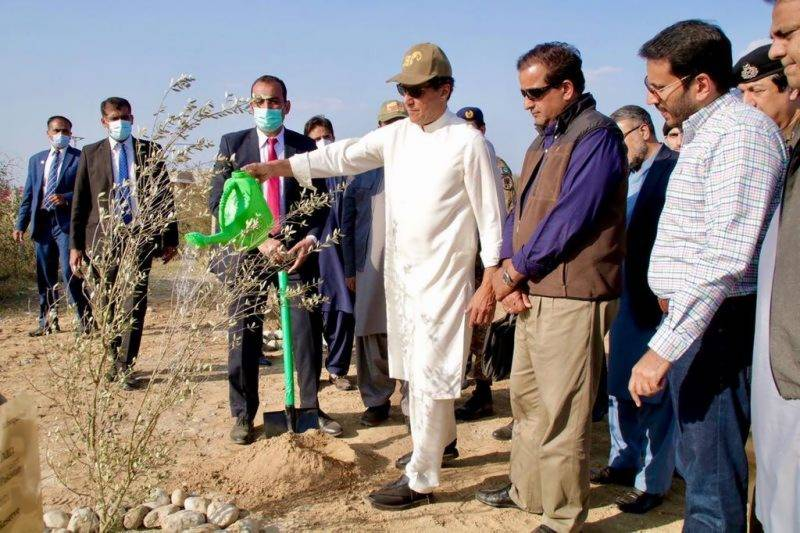 PM Imran launches olive plantation campaign in Nowshera